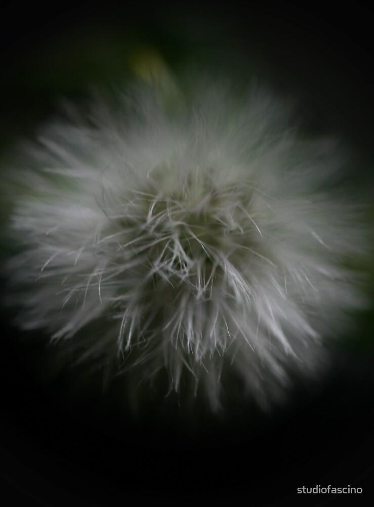 dark wishes by studiofascino