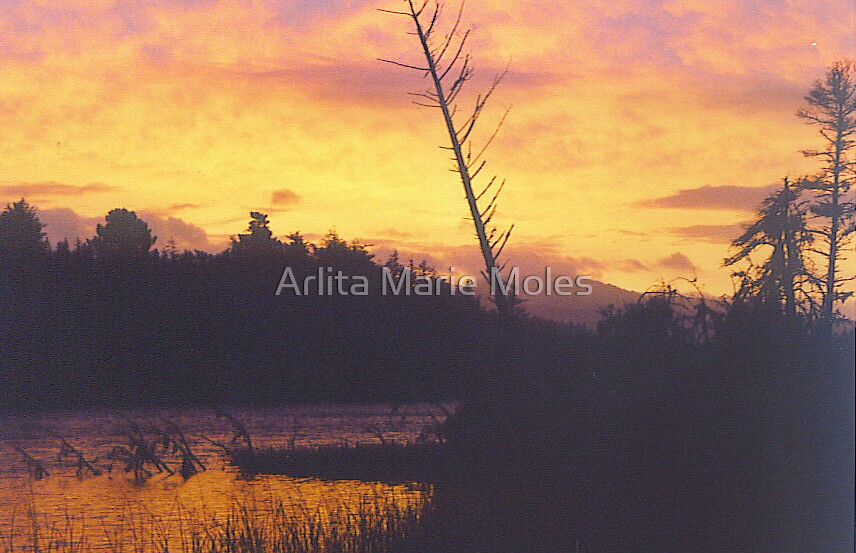 Silouetted Lake  by Arlita Marie Moles