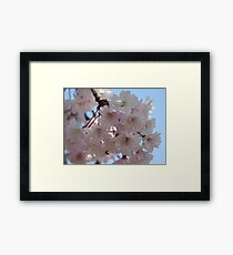 Pink Dreamy Cherry Blossoms  Framed Print