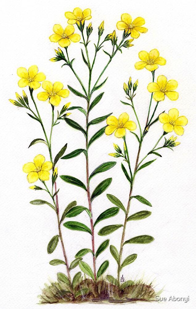 Golden Flax - Linum flavum by Sue Abonyi