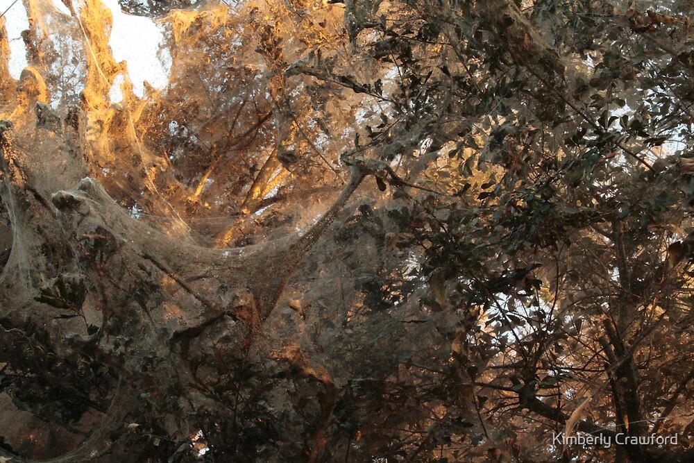 Tawakoni Sunset Spiders by Kimberly Crawford