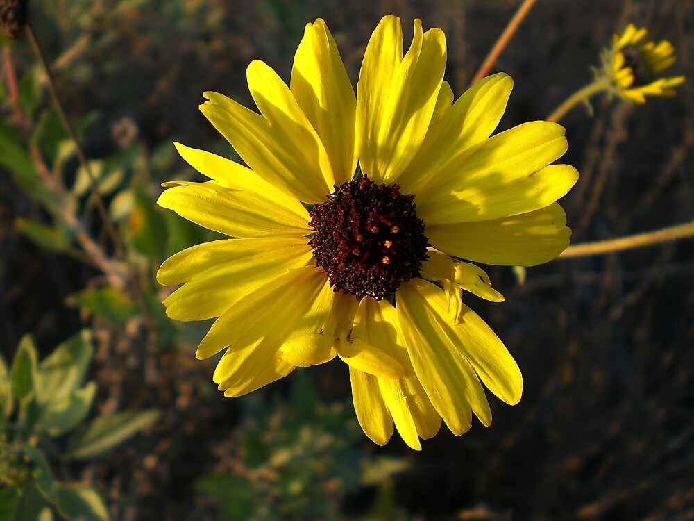 Big Yellow by Dianna