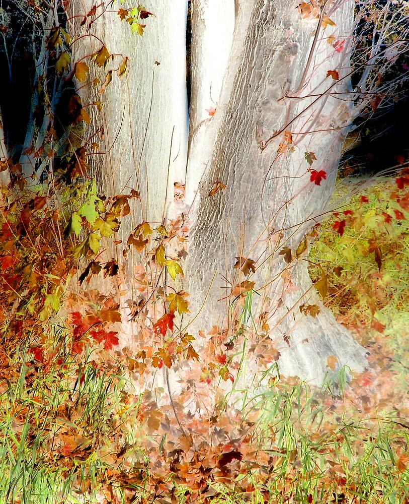 Tree by nikspix