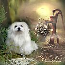 Snowdrop the Maltese at The Wishing Well by Morag Bates