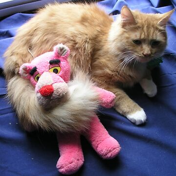 Cat with Toy by bcdoherty