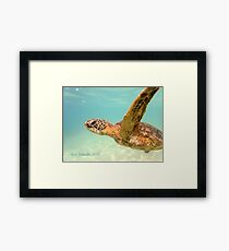 Turtle Art Framed Print