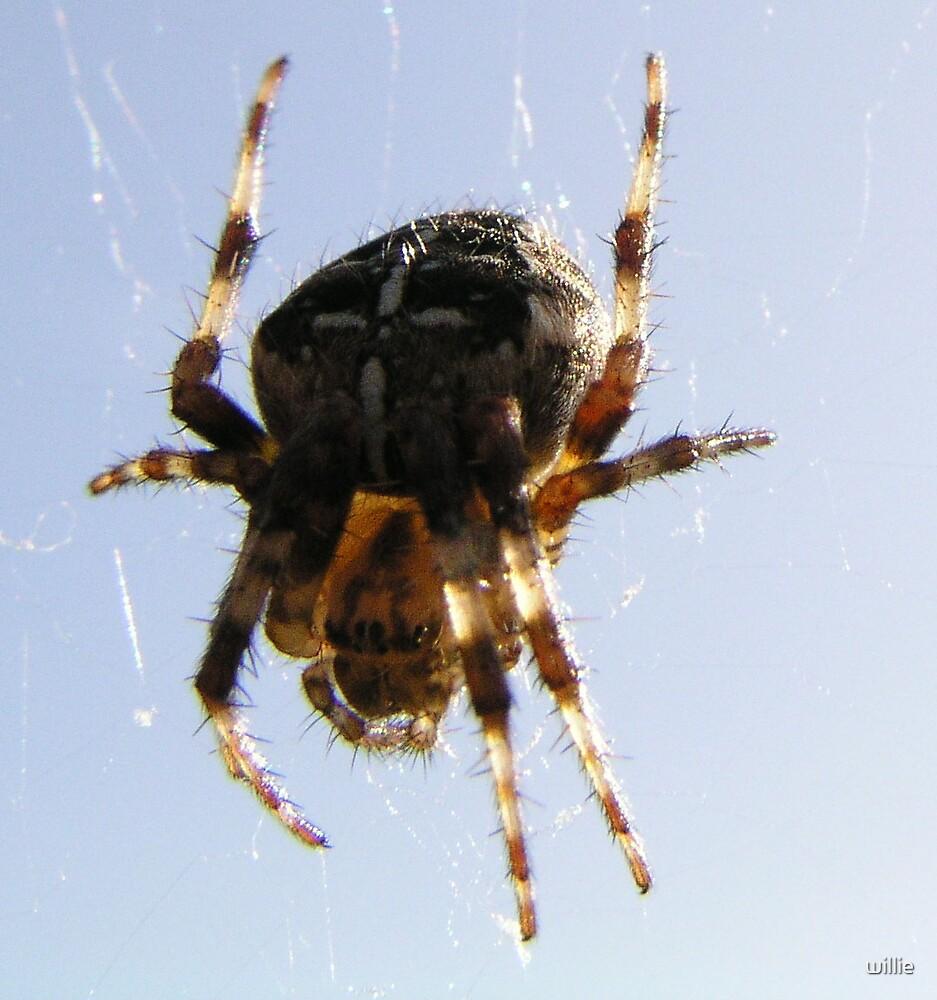 Spider by willie