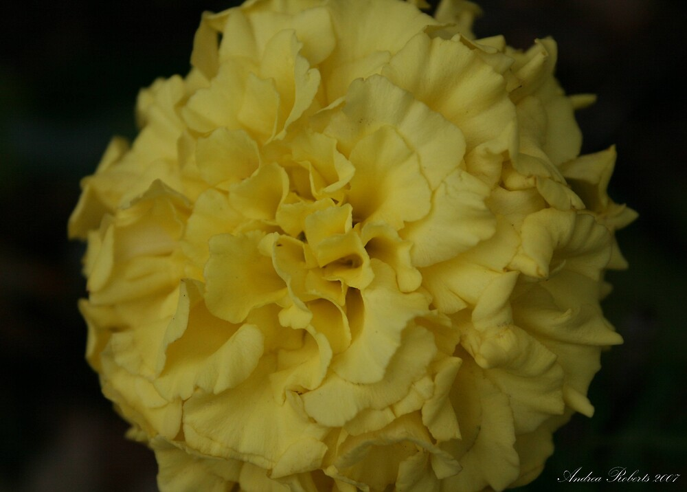Yellow by andyruh
