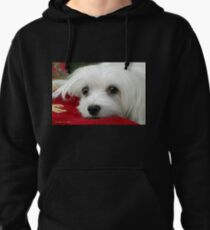 Snowdrop the Maltese  Pullover Hoodie