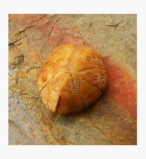 fossil Photographic Print