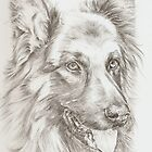 German Shepherd - Barney by lizblackdowding