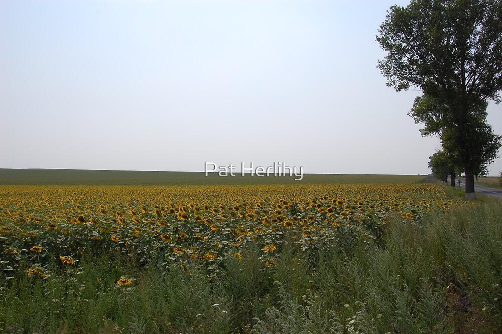 Romanian Landscape by Pat Herlihy