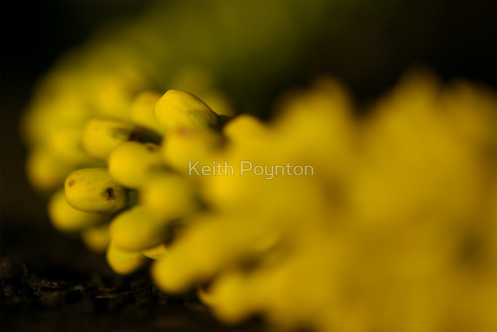 Yellow  by Keith Poynton