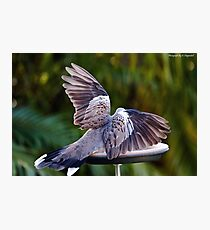 Dove wings of beauty 1010 Photographic Print