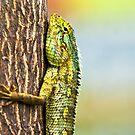 Chameleon by dhar