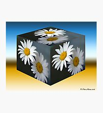 Daisies Cubed Photographic Print