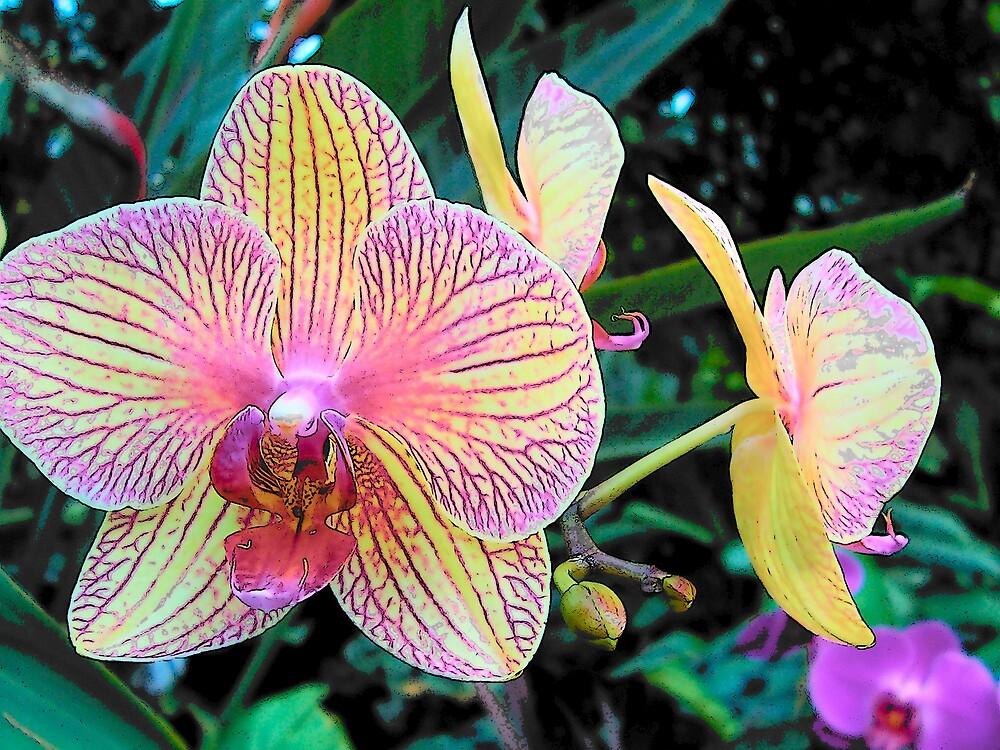 Purple Flowers by CynthiaRenee