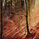 The fallen Leaves in the Black Forest........... by Imi Koetz