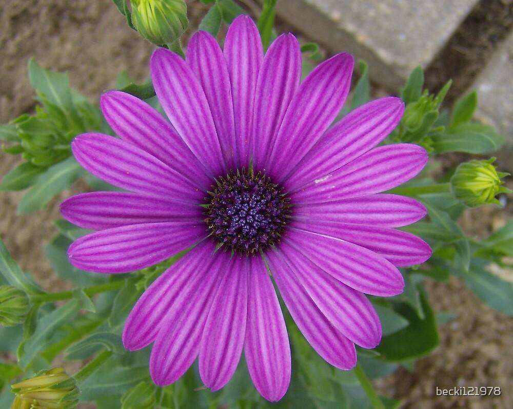Purple Flower by becki121978