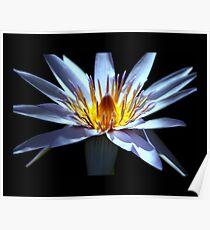 flower 24 Poster