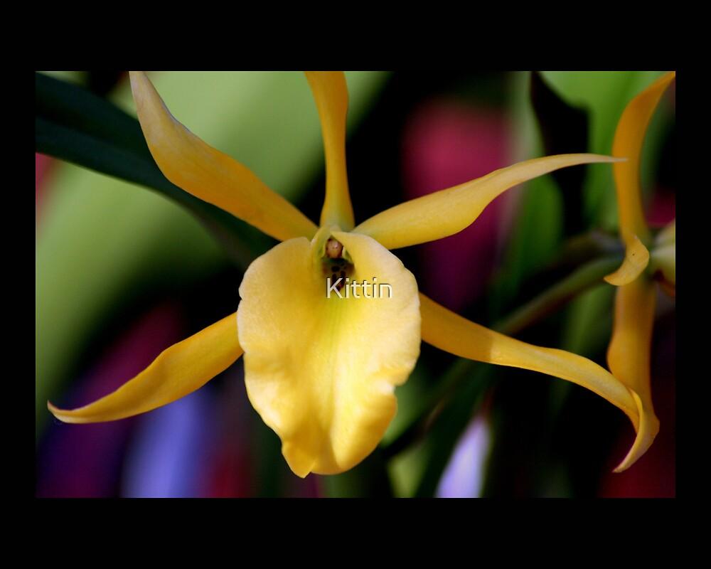 flower 25 by Kittin