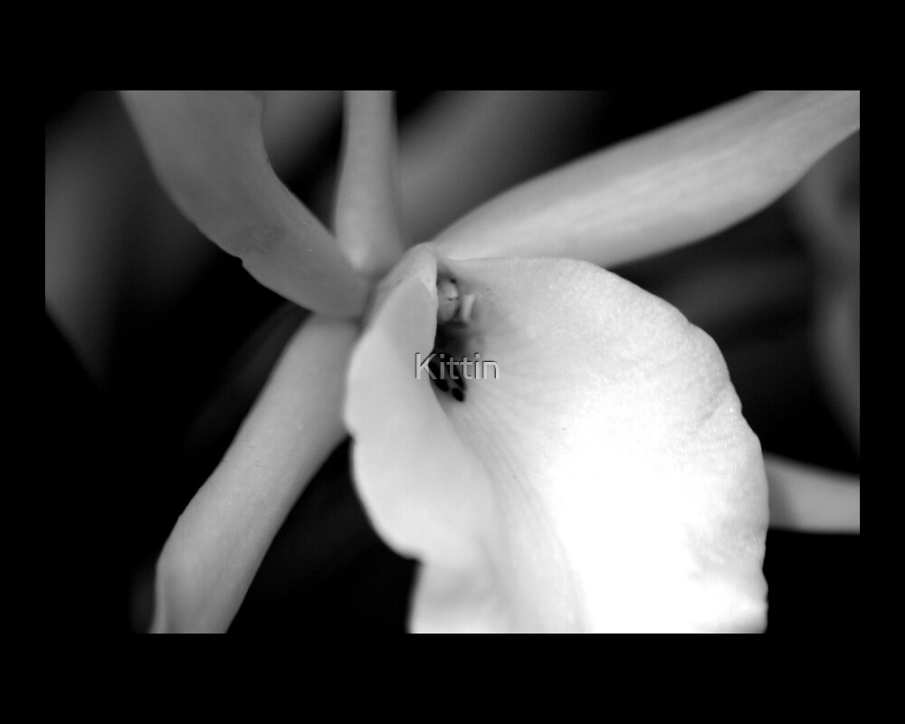flower 28 by Kittin