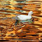 Joy on Golden Lake by Peco Grozdanovski