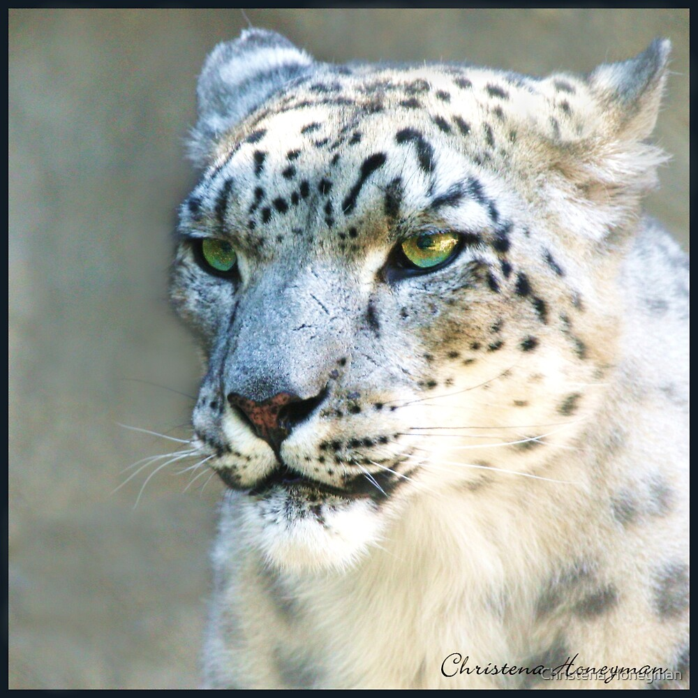 Snow Leopard by Christena Honeyman