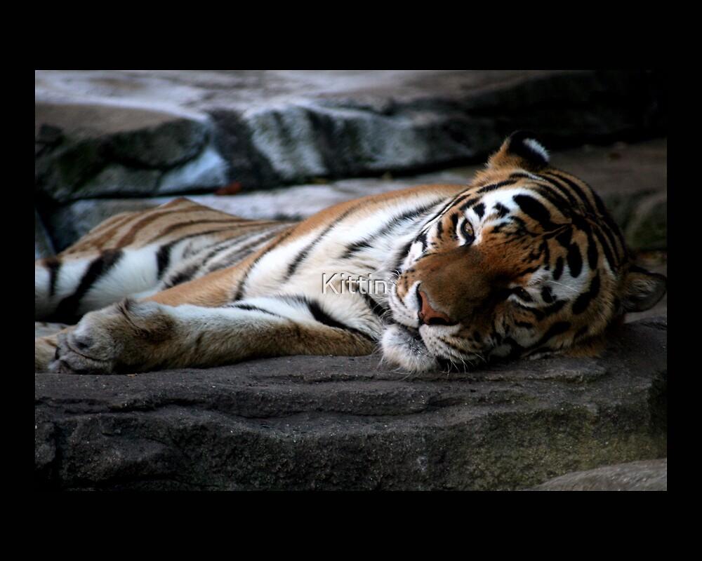 tiger 02 by Kittin