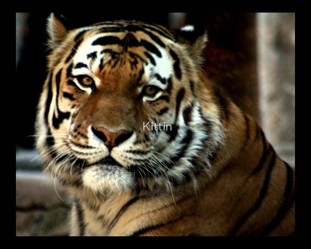 tiger 04 by Kittin