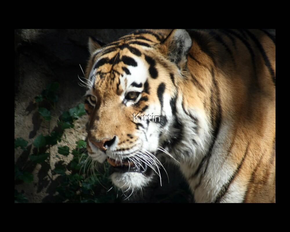 tiger 06 by Kittin