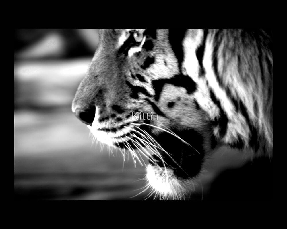 tiger 09 by Kittin