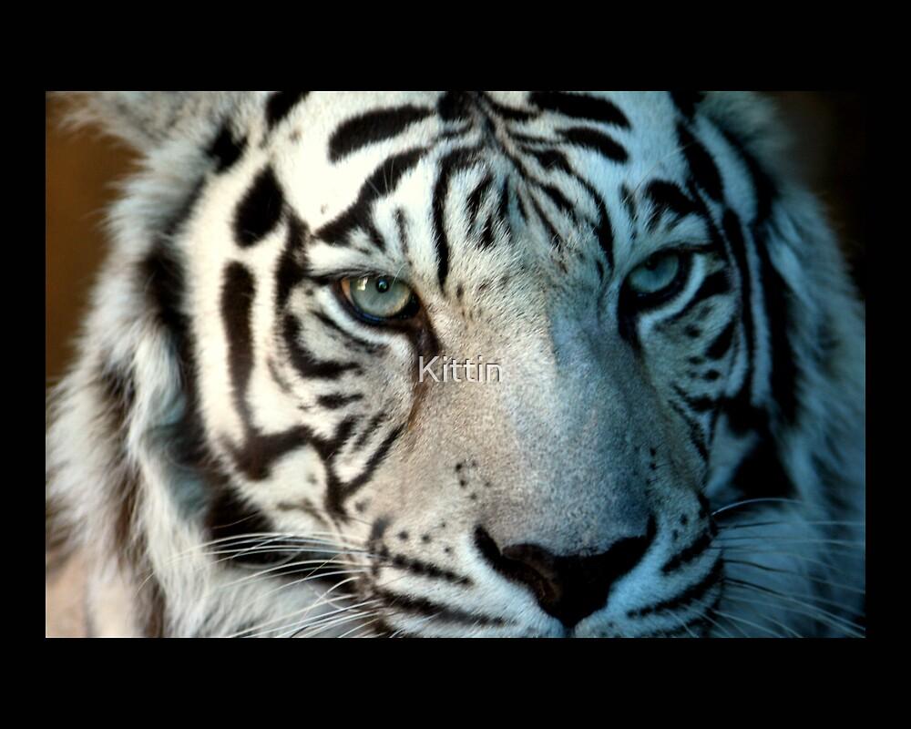 tiger 10 by Kittin