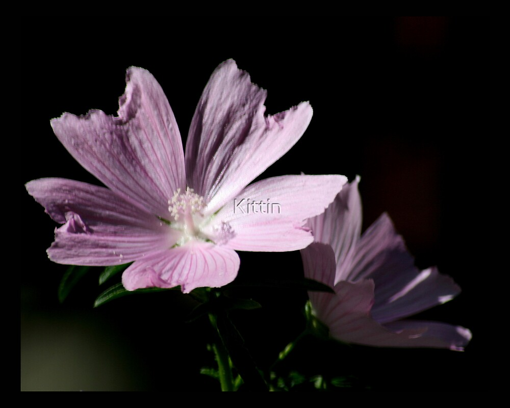 flower 41 by Kittin