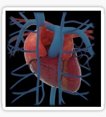 3D rendering of human heart and thoracic veins. Sticker