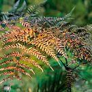Golden ferns by Fizzgig7