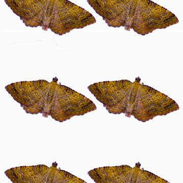 moths by Thornley