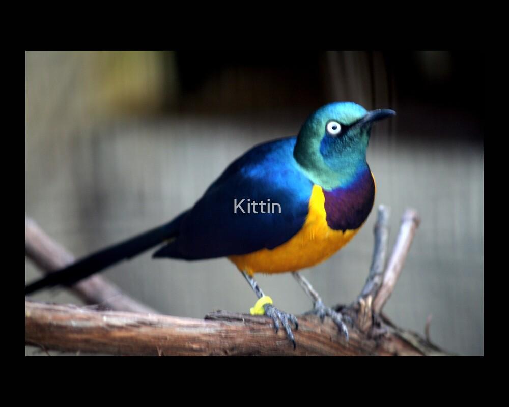 bird 01 by Kittin