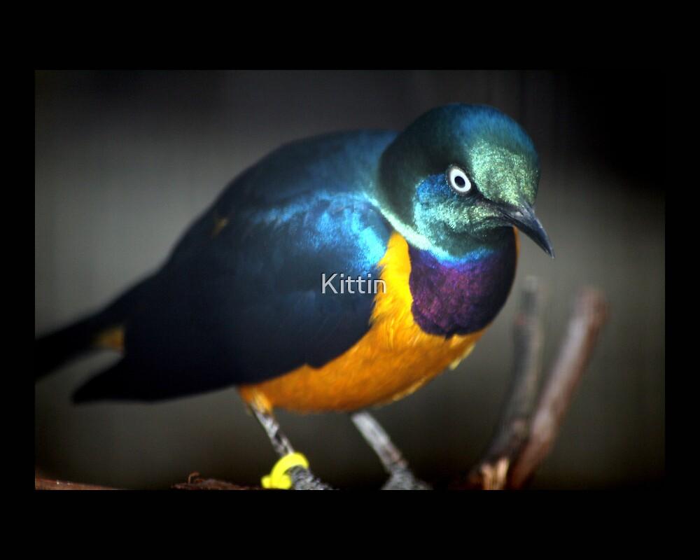 bird 02 by Kittin