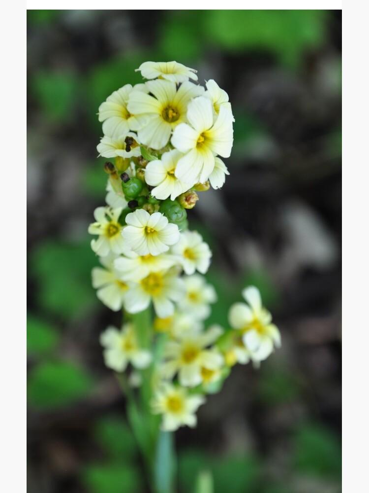 Flowers by gabriellaksz