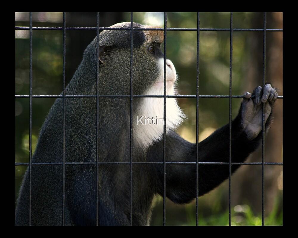 monkey 02 by Kittin