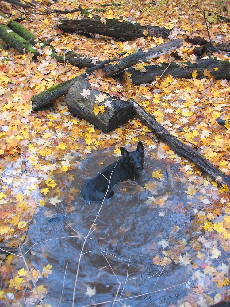 Pheobe Having A Leaf Bath by nikspix