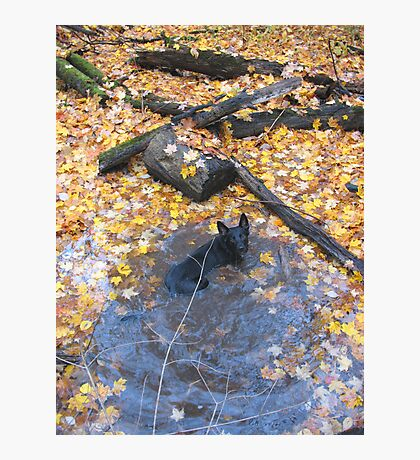 Pheobe Having A Leaf Bath Photographic Print