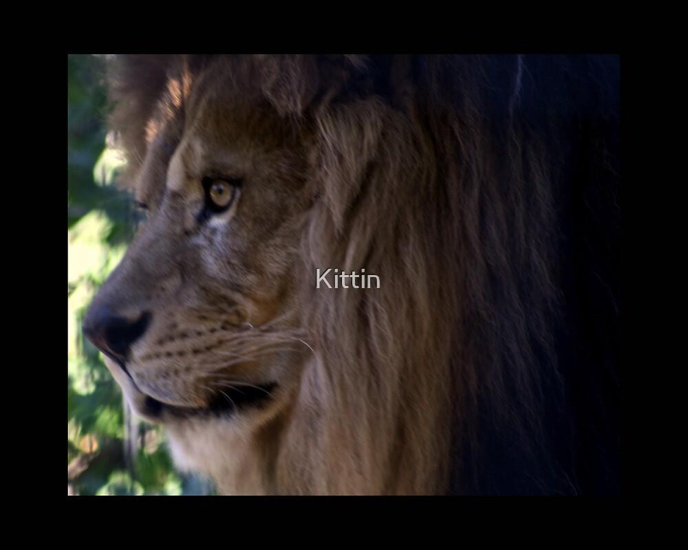 lion 05 by Kittin