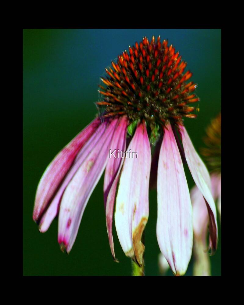 flower 43 by Kittin