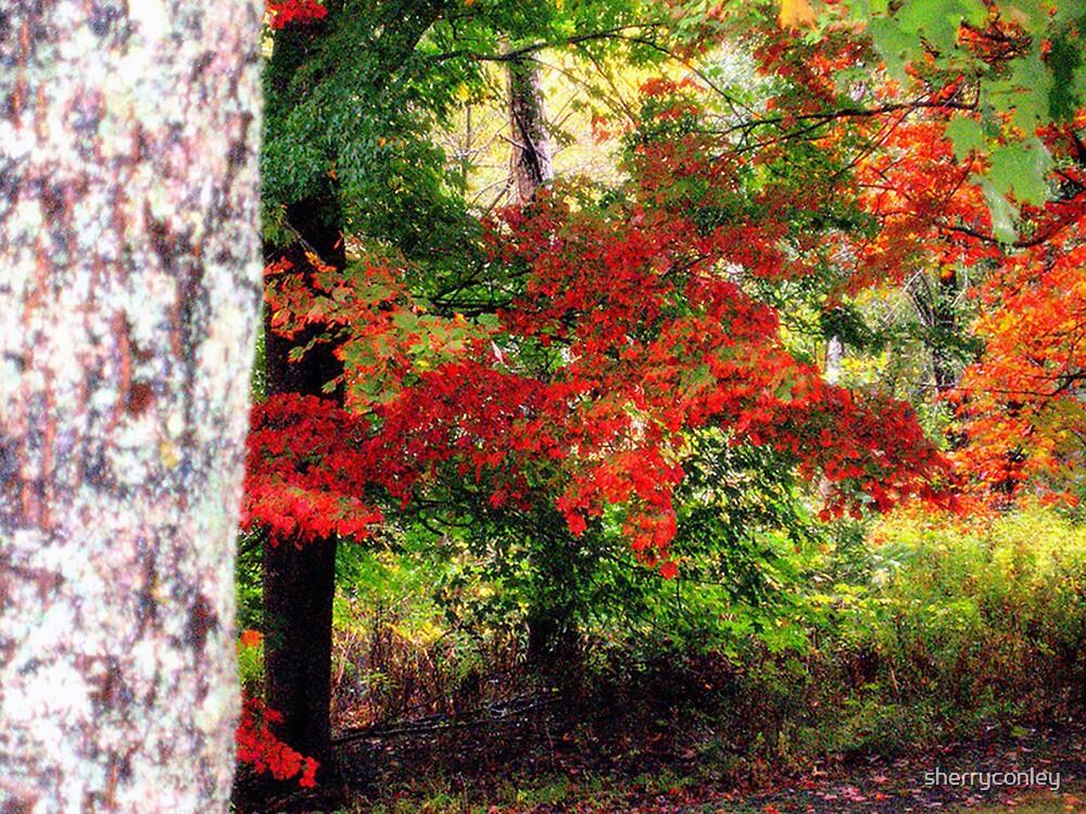 Autumn Beauty by sherryconley