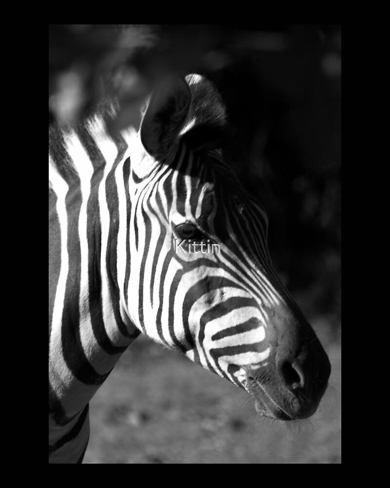 zebra 02 by Kittin
