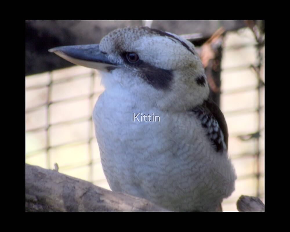 bird 09 by Kittin