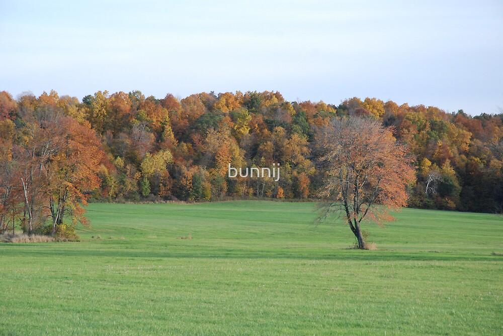 Field Of Colors by bunnij