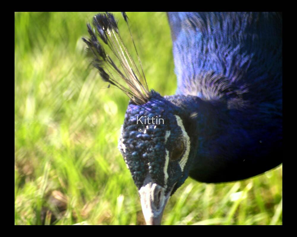 bird 13 by Kittin